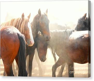 Wild Horses - Australian Brumbies 2 Canvas Print
