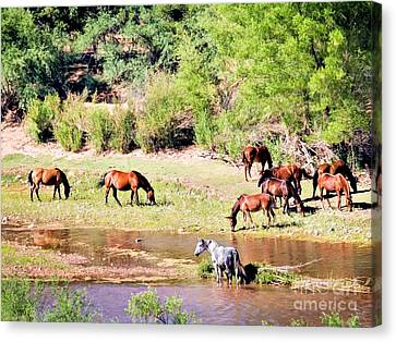Wild Horses Grazing At Waterhole  Canvas Print