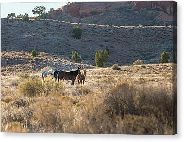 Canvas Print featuring the photograph Wild Horses In Monument Valley by Jon Glaser