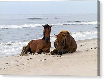 Wild Horses Of Assateague Island Canvas Print by Edward Kreis
