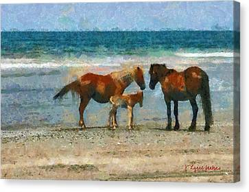 Wild Horses Of The Outer Banks Canvas Print