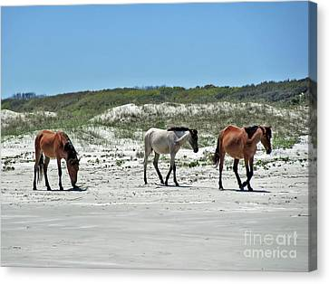 Wild Horses On The Beach Canvas Print by D Hackett