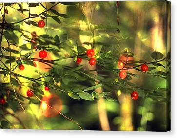 Wild Huckleberries On The Bush Canvas Print by Lyle Leduc