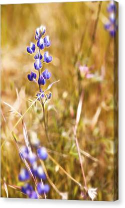 Wild In The Field II Canvas Print