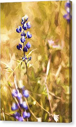 Wild In The Fieldiii Canvas Print