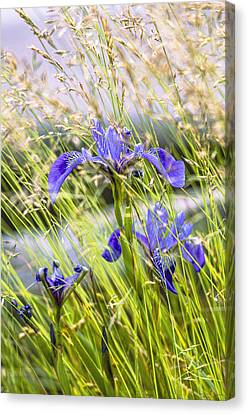 Wild Irises Canvas Print by Marty Saccone