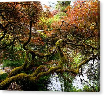 Wild Japanese Maple Canvas Print by Sonja Anderson