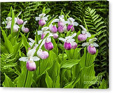Wild Lady Slipper Flowers Canvas Print by Edward Fielding