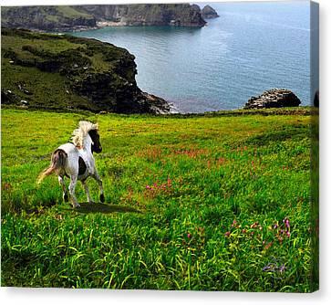 Briton Canvas Print - Wild Little Pony by Vicki Lea Eggen