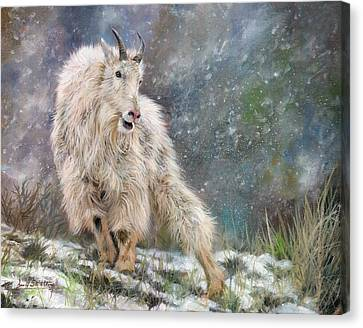 Mountain Goat Canvas Print - Wild Mountain Goat by David Stribbling