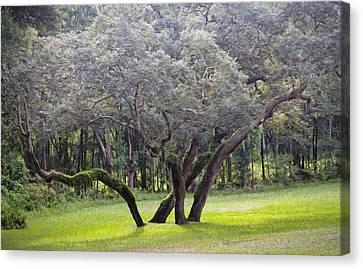 Wild Oak Canvas Print