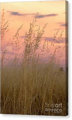 Canvas Print featuring the photograph Wild Oats by Linda Lees