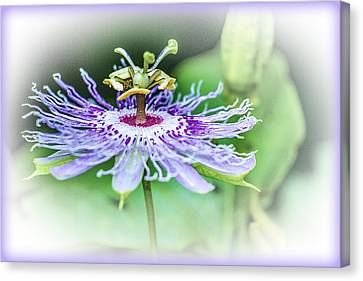 Wild Passion - Floral Canvas Print by Barry Jones