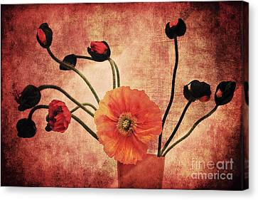 Wild Poppies Canvas Print by Angela Doelling AD DESIGN Photo and PhotoArt