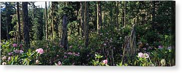 Forest Floor Canvas Print - Wild Rhododendrons Mount Hood National by Panoramic Images