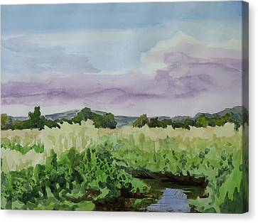 Wild Rice Field Canvas Print by Bethany Lee
