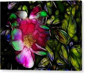 Wild Rose - Colors Canvas Print by Stuart Turnbull