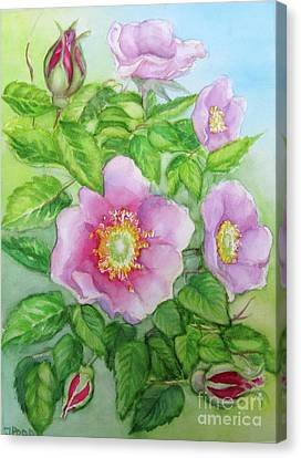 Wild Rose 3 Canvas Print