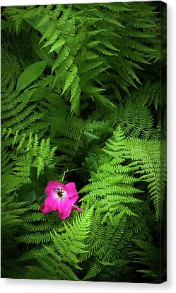 Wild Rose And Fern Canvas Print