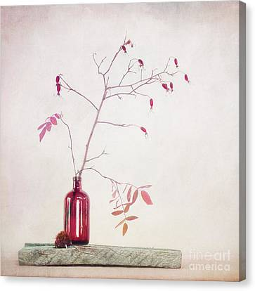 Wild Rosehips In A Bottle Canvas Print by Priska Wettstein