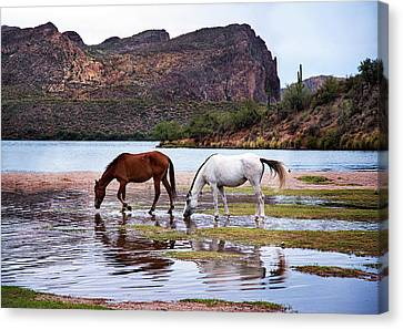 Canvas Print featuring the photograph Wild Salt River Horses At Saguaro Lake Arizona by Dave Dilli