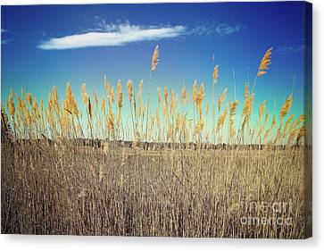Canvas Print featuring the photograph Wild Sea Oats by Colleen Kammerer