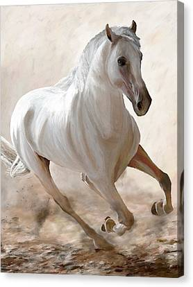 Wild Spirit Canvas Print by James Shepherd