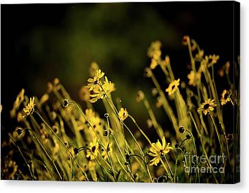 Canvas Print featuring the photograph Wild Spring Flowers by Kelly Wade