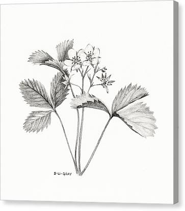 Wild Strawberry Drawing Canvas Print by Betsy Gray