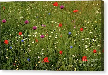 Wild Summer Meadow Canvas Print