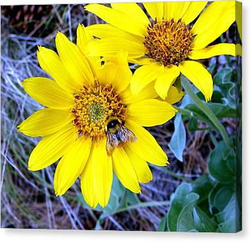 Wild Sunflowers And Bee Canvas Print by Will Borden