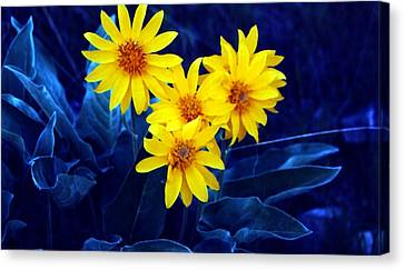 Wild Sunflowers Canvas Print by Tiffany Vest