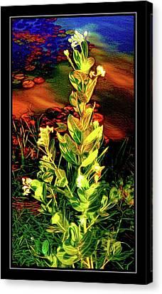 Wild Thai Lake Jasminum - Photo Painting Canvas Print