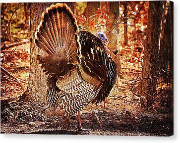 Canvas Print featuring the photograph Wild Turkey by Angel Cher