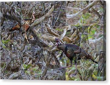 Meleagris Canvas Print - Wild Turkey Coming Through Abstract Brush by rd Erickson