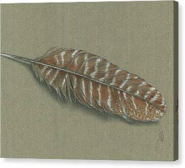 Wild Turkey Feather Canvas Print