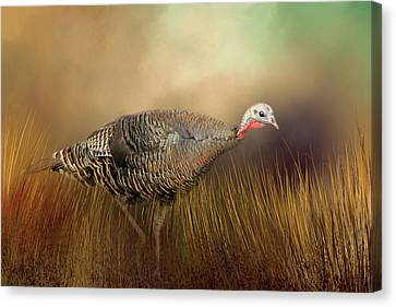 Canvas Print featuring the photograph Wild Turkey Hen by Donna Kennedy