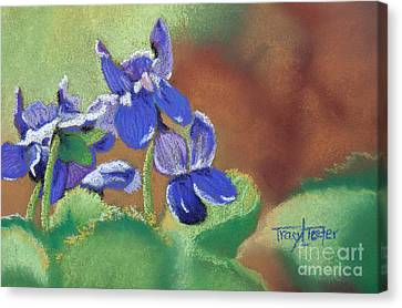 Wild Violets Canvas Print by Tracy L Teeter