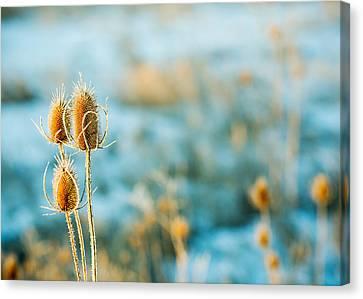 Wild Weed Canvas Print by Todd Klassy
