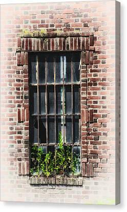 Wild Window Garden Canvas Print by Bill Cannon