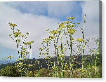 Wild Yellow Flowers Canvas Print