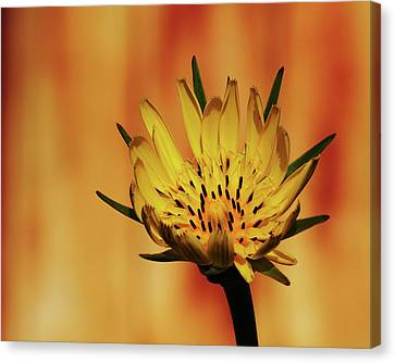 Canvas Print - Wildbloom by Tom Druin