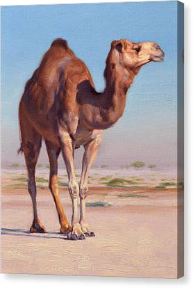 Wilderness Camel Canvas Print by Ben Hubbard