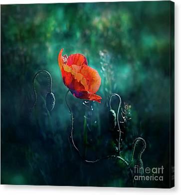 Wildest Dreams Canvas Print by Agnieszka Mlicka