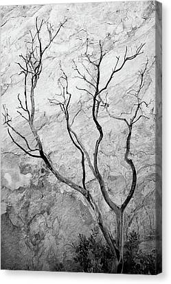 Wildfire Manzanita Canvas Print