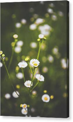 Canvas Print featuring the photograph Wildflower Beauty by Shelby Young