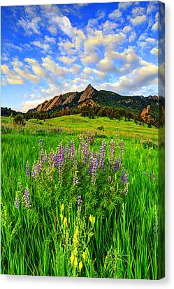 Fort Collins Canvas Print - Wildflower Colors by Scott Mahon