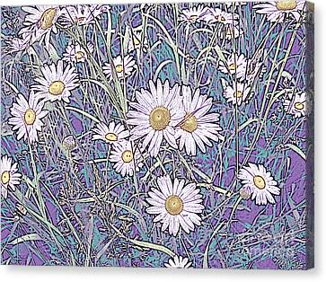 Wildflower Daisies In Field Of Purple And Teal Canvas Print