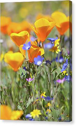 Canvas Print featuring the photograph Wildflower Detail by Cliff Wassmann