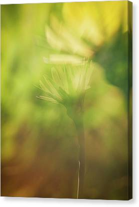 Wildflower..double Exposure Canvas Print by Tom Druin